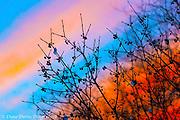 20180222_buttermilk_sunset_diane_duthie_designs_
