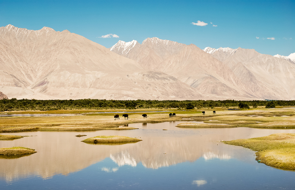High altitude pasture in Ladakh. The river reflects the beautiful mountains on the background and the clouds