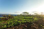 Trail through volcanic landscape, North Seymour Island, Galapagos, Ecuador, South America
