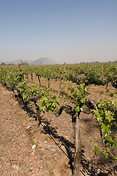 Chile Wine Country: Vineyards at Concha y Toro Winery, Vina Concha y Toro, in Santiago..Photo #: ch464-33788.Photo copyright Lee Foster, 510-549-2202, www.fostertravel.com, lee@fostertravel.com.