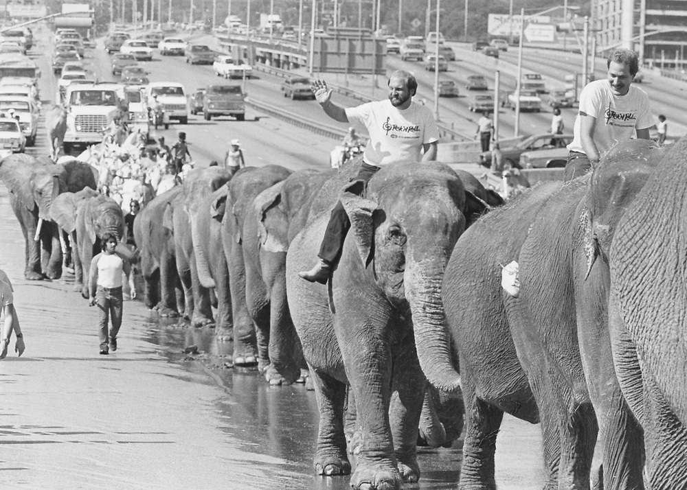 circa 1980's   Ringling Bros. Barnum and Bailey Circus parade of elephants in Austin, Texas on the way to the Erwin Center.