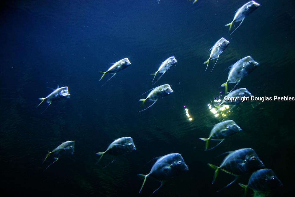 The Strip, Las Vegas, Nevada.The Shark Reef, Mandalay Bay, Las Vegas, Nevada.