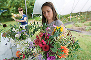 """A course participant during one of Rachel's Sunday morning flower arranging course at 'Green and Gorgeous'. <br /><br />Rachel is the owner of """"Green and Gorgeous"""" Flower Farm in Oxfordshire. She is well known for the flower arranging courses she offers. Her flower farm also caters for events, weddings and private picking<br /><br />British local flowers, grown nearby, count for around 10% of the UK market, traveling less than a tenth of their foreign counterparts which are often flown in from abroad. Nearly 90% of the flowers sold in the UK are actually imported, and many travel over 3000 miles. Local flower farms help biodiversity, providing food and habitat to a huge variety of wildlife, insects including butterflies, bugs, and bees. Often local flower farmers prefer to grow organic rather than using pesticides. British flowers bloom all the year around, even in the depths of winter, and there are local flower farms throughout the country.<br /><br />Many people like the idea of the just picked from the garden look, and come to flower farms throughout Britain to pick their own for weddings, parties and garden fetes. Others come for the joy of a day out in the countryside with their family. Often a bride and her family will come to pick the flowers for her own wedding, some even plant the seeds earlier in the year."""