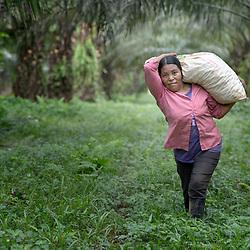 Palm Oil, Honduras