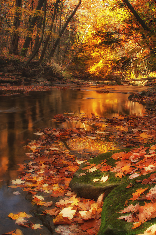 """Beautiful fall colors create the perfect backdrop to a lazy, winding creek.<br /> <br /> Available sizes:<br /> 12"""" x 18"""" <br /> See Pricing page for details. <br /> <br /> Please contact me for custom sizes and print options including canvas wraps, metal prints, assorted paper options, etc. <br /> <br /> I enjoy working with buyers to help them with all their home and commercial wall art needs."""