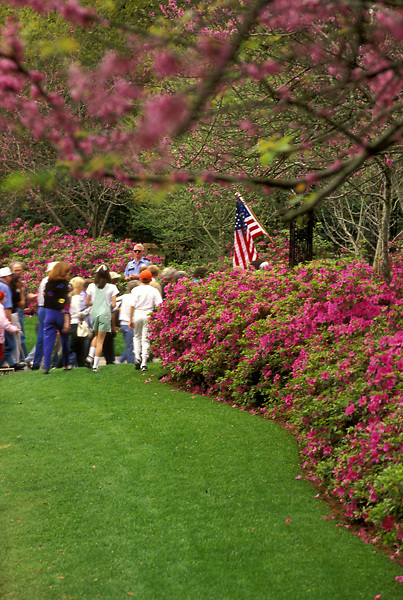 Stock photo of visitors to Bayou Bend enjoying the azaleas.