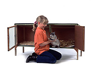 Young Girl getting Pet Rabbit out of hutch, aged 10 years old, domestic, white background, cut out, studio