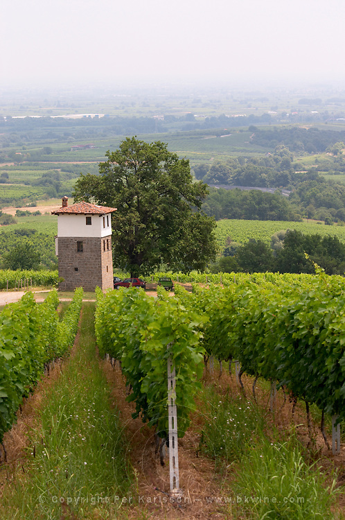 Vineyard. The watch tower. Cabernet Franc. Kir-Yianni Winery, Yianakohori, Naoussa, Macedonia, Greece