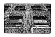 SHOT 8/29/10 3:46:12 PM - Vines cover an exterior wall of a factory in downtown Buffalo, NY. Buffalo, N.Y. is the second most populous city in the state of New York and is located in Western New York on the eastern shores of Lake Erie and at the head of the Niagara River. By 1900, Buffalo was the 8th largest city in the country, and went on to become a major railroad hub, the largest grain-milling center in the country and the home of the largest steel-making operation in the world. The latter part of the 20th Century saw a reversal of fortunes: by the year 1990 the city had fallen back below its 1900 population levels. .(Photo by Marc Piscotty / © 2010)