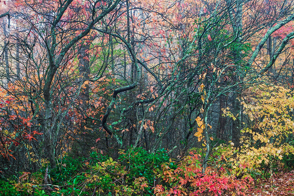 Autumn tapestry, Linville Gorge Wilderness