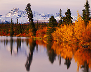 Autumn colors along the shore of Rock Lake with fresh snow on Tanada Peak beyond, Wrangell-St. Elias National Park, Alaska.
