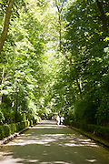 Green trees shading walk up hill to the Alhambra, Granada, Spain