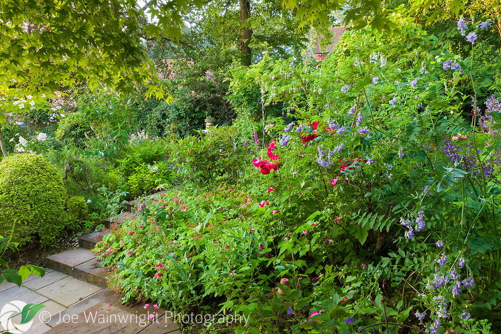 A private garden, in Park Crescent, Appleton, Cheshire, is seen here photographed in July. It contains many unusual plants, mature trees and a mini orchard. Other features include: ponds; wildlife-friendly planting; raised beds; many varieties of roses; and herbaceous borders. The garden, which has developed over 19 years and is still evolving, has been split into distinct areas on different levels each with their own view across the garden. It is open through the National Garden Scheme.