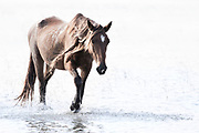 """""""Grace is not part of consciousness; it is the amount of light in our souls, not knowledge nor reason"""" ~ Pope Francis<br /> <br /> Tracie Spence's fine art photography series of The Spanish Wild Mustangs."""