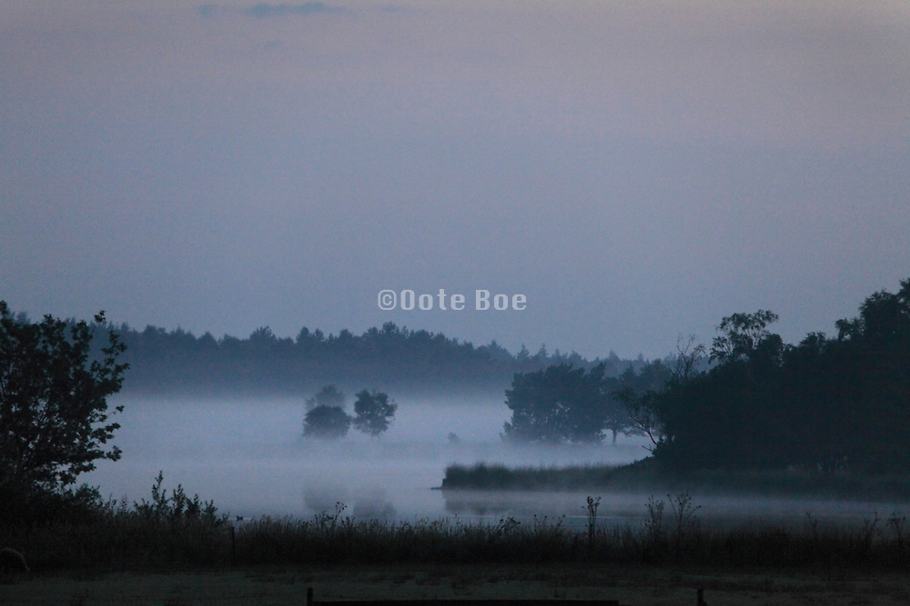 heath landscape during early morning with low hanging fog Holland Noord Brabant Westelbeers