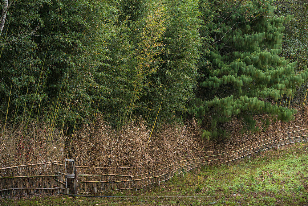 Bije or bamboo garden usually located near the village. Each family own one<br /> Apatani Tribe<br /> Ziro Valley, Lower Subansiri District, Arunachal Pradesh<br /> North East India