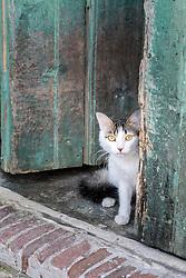 7 October 2015, Caibarien, Cuba: Concerned cat looking out through doorway in Caibarien, Cuba.