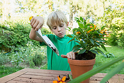 Concentrating young boy repotting plant