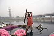 A Dhobi Wallah washes clothes by beating them with a club in the Yamuna River by the Kudsia Ghat in Delhi. The river is so polluted that it can no longer support life however a community lives and works on it's banks.