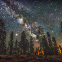 The Milky Way as seen over a row of pine trees in the Sierra Nevada mountains of California.