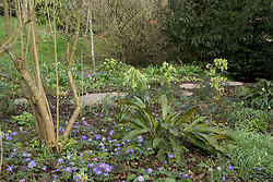 Stepping stone path through woodland area in early spring<br /> Anemone blanda in the foreground<br /> Design: Mary Keen