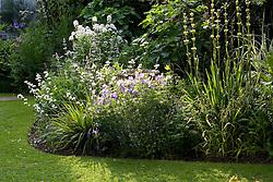 Evening light backlighting an early summer border with Geranium 'Johnson's Blue', Libertia grandiflora, Sisyrinchium striatum and Hesperis matronalis var. albiflora - sweet rocket