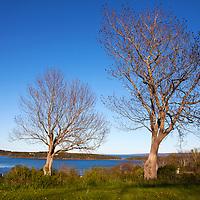 North America, Canada, Nova Scotia, Guysborough. Bare Trees welcome a sunny day in spring.