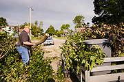 "12 AUGUST 2020 - SLATER, IOWA: SCOTT ALLEY cleans up debris from trees in their yard that were destroyed by the storm Monday. According to Iowa Governor Kim Reynolds, the storm damaged 10 million acres of corn and soybeans in Iowa, about 1 one-third of Iowa's 32 million acres of agricultural land. Justin Glisan, Iowa's state meteorologist, said the storm Monday, Aug. 10, lasted 14 hours and traveled 770 miles through the Midwest before losing strength in Ohio. The storm was a seldom seen ""derecho"" that packed straight line winds of nearly 100MPH. The storm pummelled Midwestern states from Nebraska to Ohio.      PHOTO BY JACK KURTZ"