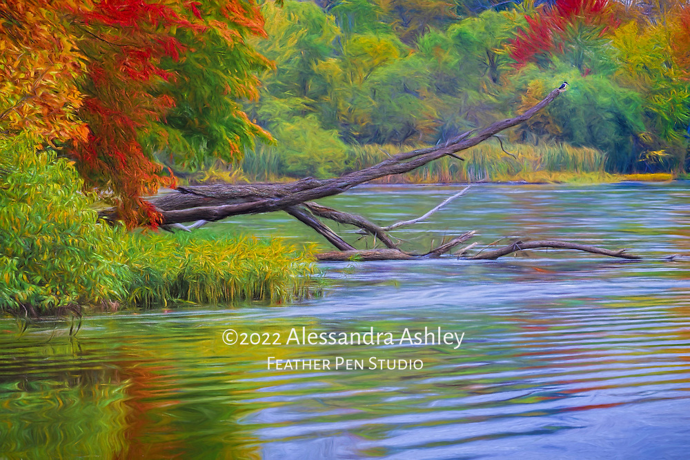 Autumn scene of the Clear Fork Reservoir, with a kingfisher perched atop a fallen tree, watching for fish activity in the water below.  Painted effects blended with original photograph.