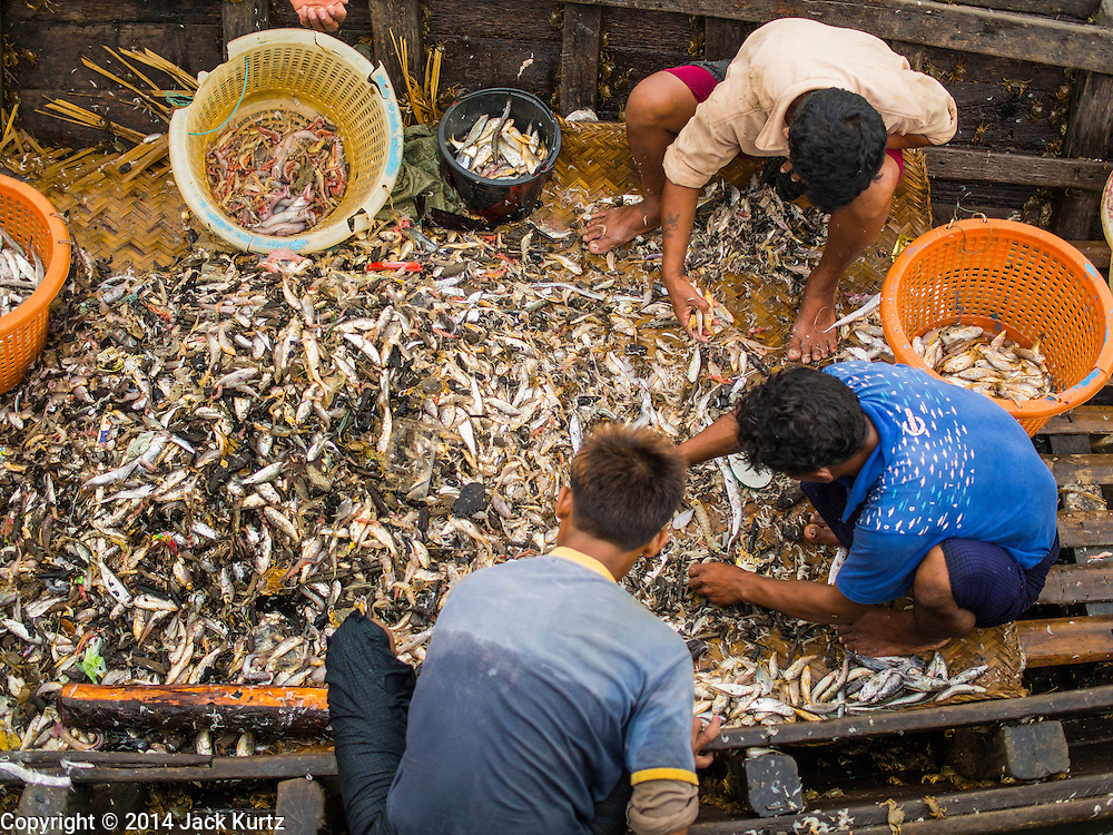 08 NOVEMBER 2014 - SITTWE, RAKHINE, MYANMAR:  People sort fish in a small boat at the pier in Sittwe. Sittwe is a small town in the Myanmar state of Rakhine, on the Bay of Bengal.  PHOTO BY JACK KURTZ