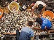 08 NOVEMBER 2014 - SITTWE, RAKHINE, MYANMAR:  People sort fish in a small boat at the pier in Sittwe. Sittwe is a small town in the Myanmar state of Rakhine, on the Bay of Bengal.  PHOTO BY JACK KURTZ