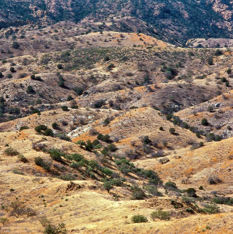 Pajarito Mountains in southern Arizona, Tumacacori Wilderness