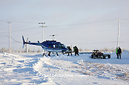 01874-11720 Polar Bear (Ursus maritimus) biologists preparing to airlift bear from Polar Bear Compound, Churchill MB