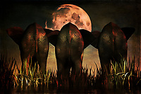 There is something both mystical and majestic to this stunning Family Portrait piece. The scene depicts three elephants facing the moon, standing over tall grass. The moon is one of the first things that is likely to capture your attention, but the detail of the elephants, all of whom are facing the moon ahead, is something else to this piece that is worth appreciating. The elephants represent something very physical. He same can be said for the moon. Yet when combined, there is something about this piece that is almost spiritual. Available to be printed on canvas, metal, acryl, as a framed print, or across a range of interior products. .<br /> <br /> BUY THIS PRINT AT<br /> <br /> FINE ART AMERICA<br /> ENGLISH<br /> https://janke.pixels.com/featured/family-portrait-jan-keteleer.html<br /> <br /> WADM / OH MY PRINTS<br /> DUTCH / FRENCH / GERMAN<br /> https://www.werkaandemuur.nl/nl/shopwerk/Dierenrijk---Olifanten-Familie-portret/437332/134