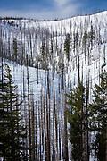 Hillside with burned in forest fire, in Oregon in winter