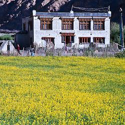 One of the many homestays on the Markha Valley Trek.