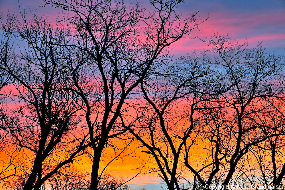 Treees at sunrise<br /> St. Francis-Xavier<br /> Manitoba<br /> Canada
