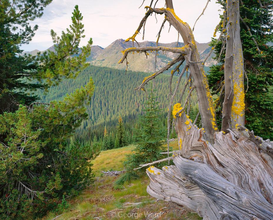 Forest at Dawn, Salmo-Priest Wilderness, Colville National Forest, Washington