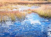 Ice in pond grasses