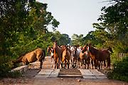 Pocone_MT, Brasil...Parque Nacional do Pantanal em Pocone, Mato Grosso...Pantanal National Park in Pocone, Mato Grosso...Foto: JOAO MARCOS ROSA  / NITRO.