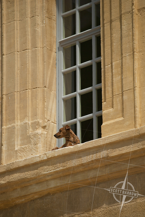 Dog in window, Central France
