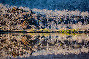 """Reflection of Palo Santo (""""holy wood"""") trees in the water, Tagus Cove, Isabela Island, Galapagos Islands, Ecuador"""