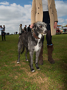 JESS HOOLEY; HECTOR; Heythrop Point to Point, Cocklebarrow, 2 April 2017.