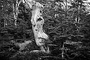 Nahuel Huapi National Park, Pampa Linda Valley, Bariloche, Rio Negro, Argentina Forest of lenga trees surrounding the Llon lagoon.