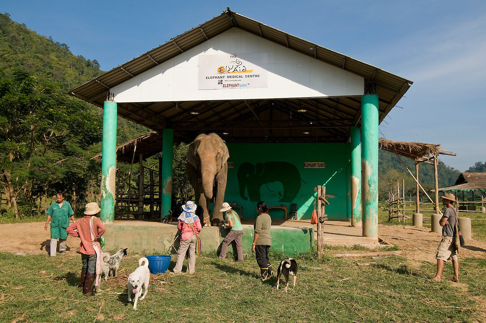 """The park veterinarian (far left) and Lek Chailert look on as Carol Buckley and Jody Thomas give an elephant a pedicure at the Elephant Nature Park near Chiang Mai, Thailand.  Sangduen """"Lek"""" Chailert founded the park as a sanctuary and rescue centre for elephants.  The park currently has 32 elephants sponsored and supported by volunteers from all over the world."""