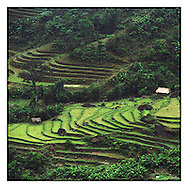 Isolated houses in the middle of paddy fields. Area of Bac Ha, North Vietnam, Asia. Jungle surround the buildings