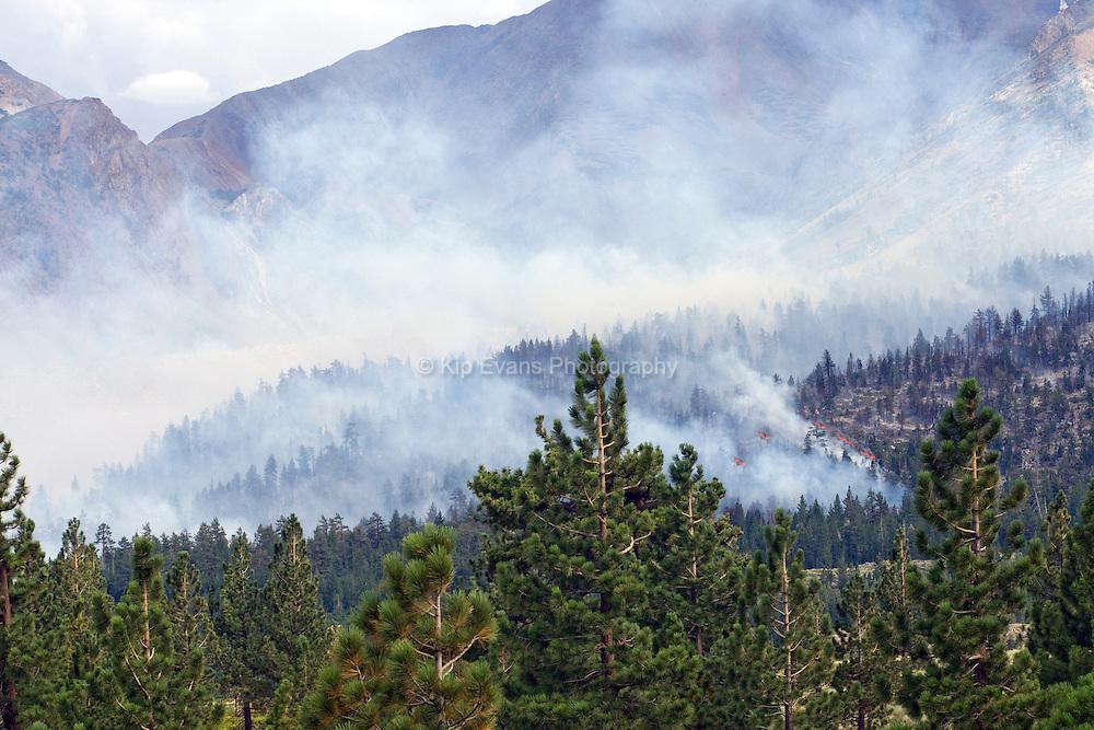 Forest Fire - Near Mammoth, CA