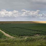 Nederland Walsoorden   gemeente Hulst  19 juni 2010 20100619       Serie landschappen provincie Zeeland. Zeeuws-Vlaanderen, landschap polderlandschap scenery met op de achtergrond de dijk van de westerschelde. Zonnenstralen op de dijk, lichtspel. wisselvallig veranderlijk weer. Op de voorgrond een landbouw perceel, telen van aardappelen.    Illustratief beeld  waterveiligheid. , sealevel, sloot, space, sprankelend, sprankelende, stijging zeespiegel, stil, stilleven, stilte, stock, stockbeeld, streek, sunny, sustainable, terrein, typerend, typical dutch landscape, typisch hollands, typisch hollands landschap, typische, uitgestrektheid, uitzicht, uniek, unieke, veiligheid, veld, vergezicht, vergezichten, verte, vrij, vrijheid weer, waaien, water level, waterbeheer, Waterbeheerplan, watergang, waterhuishouding, waterkering, waterkeringen, Waterkeringen, waterlevel, watermanagement, waterniveau, waterpeil, waterplan, waterproblematiek, waterstaatkundige, waterstand, watersysteem, waterveiligheid, waterveiligheid en gebiedsontwikkeling, waterwerken, weersomstandigheden, wei, weide, weidegang, weiland, weiland. Landscape, wijdheid, wijds, wijdsheid, wind, wit, witte, wolk, wolken, wolkenpartij, zeeland, zeeuws vlaanderen, zeeuws-vlaanderen, zeewering, zo vrij als een vogel, zonnig, zonnige dag, zware, zwitserleven gevoel Foto: David Rozing