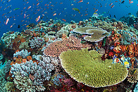 Incredible mix of healthy Hard and Soft Corals, reef fish<br /> <br /> Shot in Indonesia