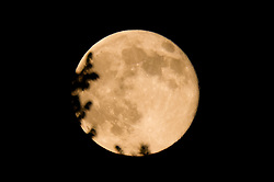 Super Moon as seen in Hamden CT on 12 July 2014. Ringed with the ends of tree brances. Camera: Nikon Df, image cropped.